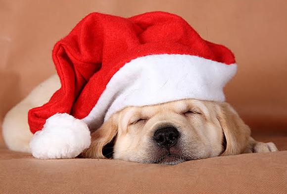 original_christmas-puppy-l